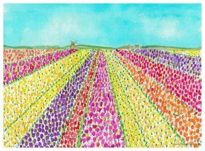 celebrate spring Tulips from Alkmaar